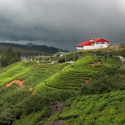 Journey into the clouds along Sri Lanka's tea trails