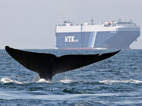 Blue Whales-Ships