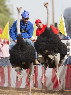 Shayne Stocking, left, and Richard Vandeusen compete in the  28th Annual Chandler Chamber Ostrich Festival at Tumbleweed Park on March 11, 2016.
