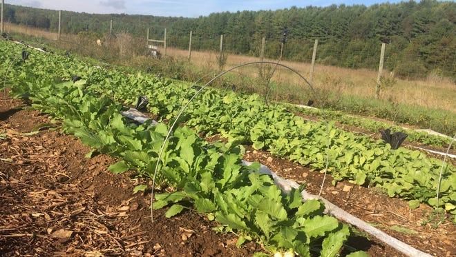 Project Grows's farm in Verona (Oct. 14, 2016).