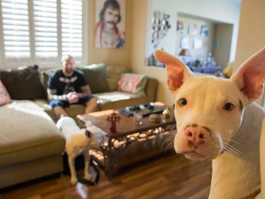 dog cancer vaccine