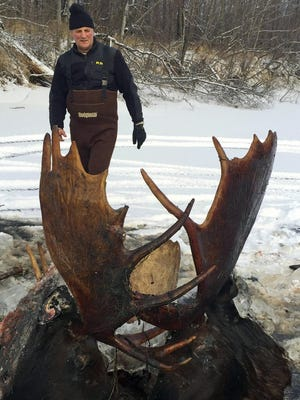 This Nov. 12, 2016 photo, provided by Jeff Erickson shows two moose frozen mid-fight and encased in ice near the remote village of Unalakleet, Alaska, on the state's western coast. Two moose were recently discovered. The unusual discovery was made Nov. 2, by a Unalakleet teacher showing a friend around a slough at a bible camp where the teacher is a volunteer camp steward. (Jeff Erickson via AP)