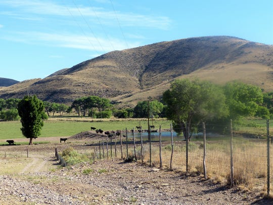 Cattle enjoy the shade and water at this ranch in the