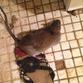 Renter Hell: Rat-plagued tenants sue landlord