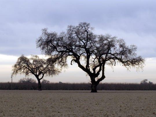 vtd 0801 Watering Trees .VTDPresto