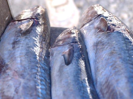 ODW Fisheries photo