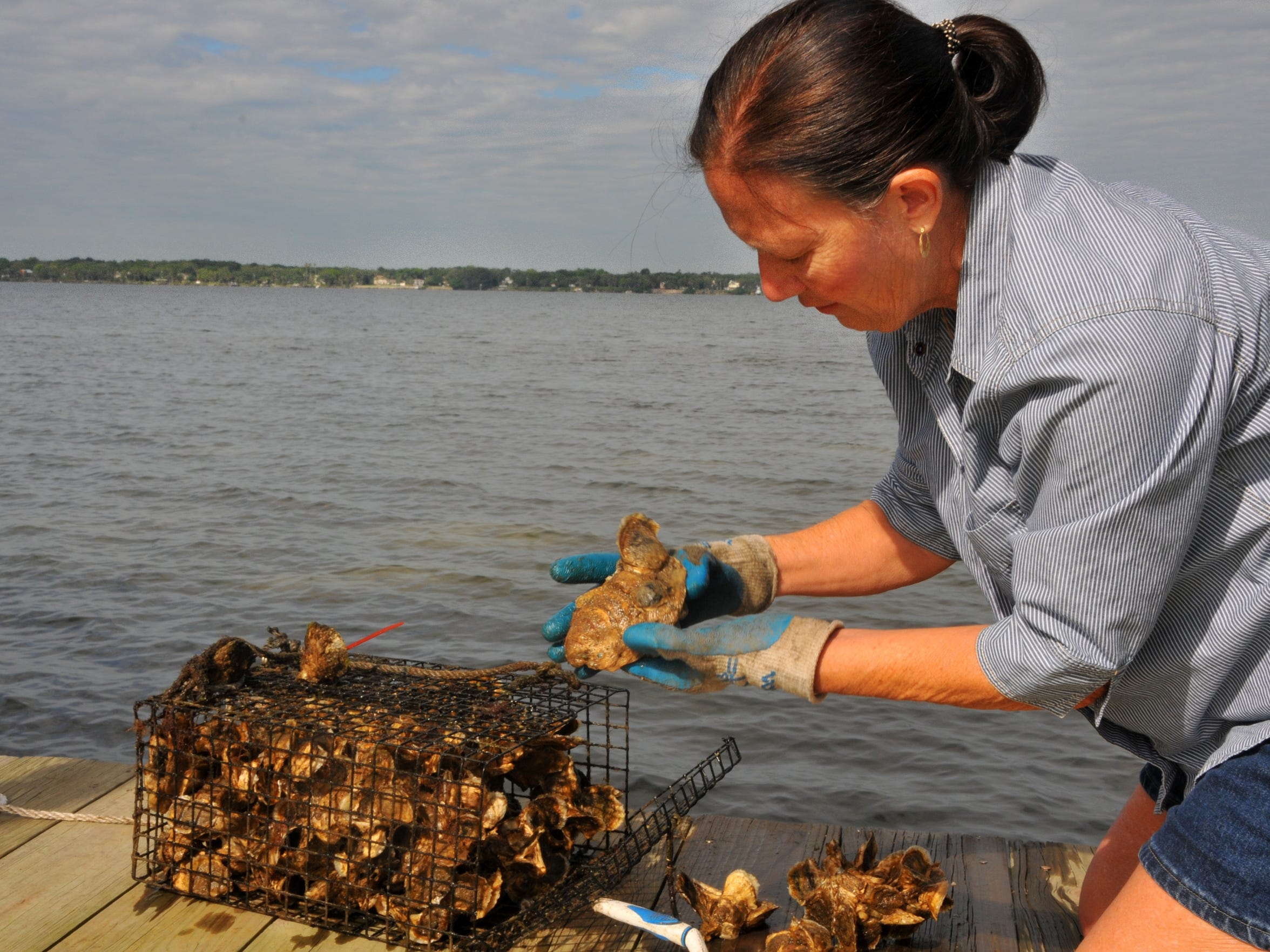 Mary Morgan checks the status of oysters weekly.