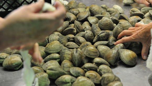 Volunteers bagged 40,000 clams at Glenwood Evans for