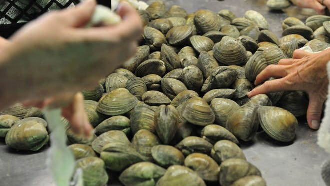 Volunteers bagged 40,000 clams at Glenwood Evans for the July 15, 33rd Annual J. Millard Tawes Crab and Clam Bake. The event will be held at Somers Cove Marina.