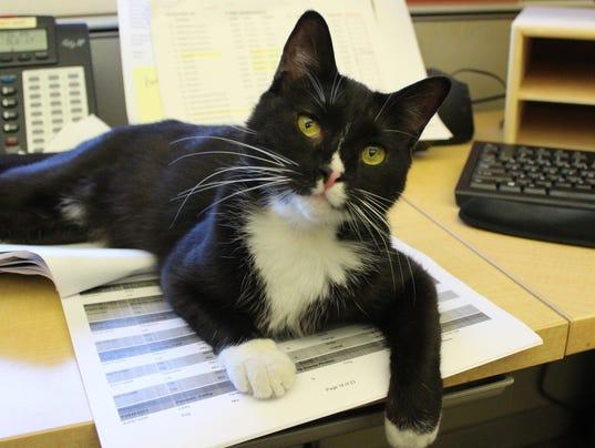 Huron Valley Humane Society Cats