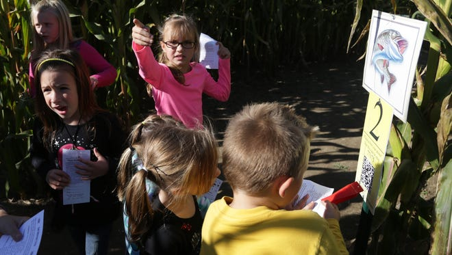 Mara Stamper, 8, of Crandon points the way to what she believes is the next station at the corn maze at Schairer's Autumn Acres in Birnamwood on Oct. 12, 2013.