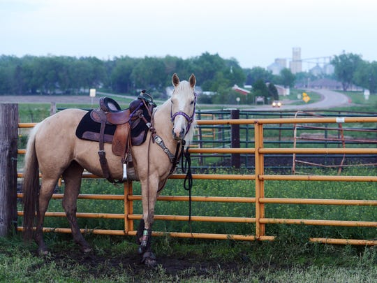 A horse stands by a fence between races Friday night at the Plum Creek Rodeo Club Barrel Racing Series in Larchwood, May 15, 2015.