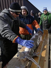 Ten sturgeon registration stations will be operating when the sturgeon spearing season opens on Saturday. Here, Wisconsin DNR staff examine a sturgeon at Wendt's on the Lake during last year's season.