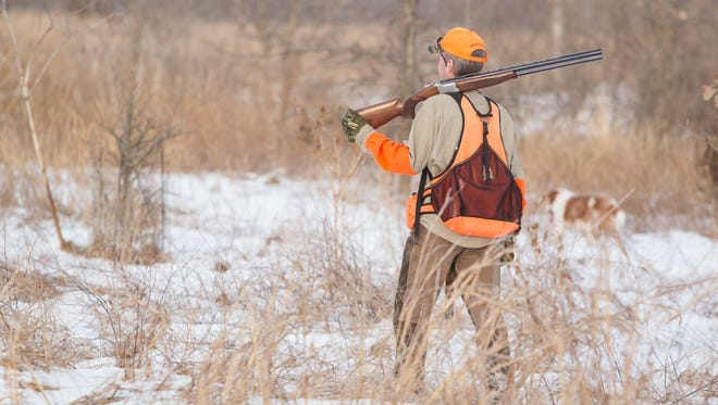 A quail hunter and his dog searching for bobwhite quail after the snow that fell in southwest Missouri.