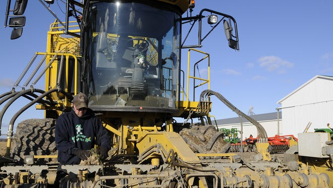 Dennis Gardner pulls a sugar beet from the front of his self-propelled sugar beet harvester Tuesday, Nov. 19, 2013 at his farm in Fremont Township.