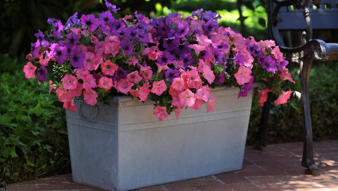 You don't need a big yard or lots of room to enjoy a beautiful garden.