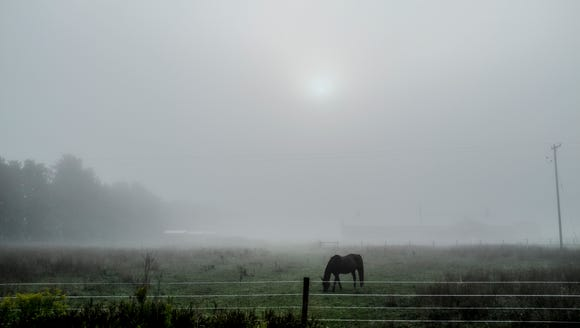 Early morning fog obscures the sun and the background