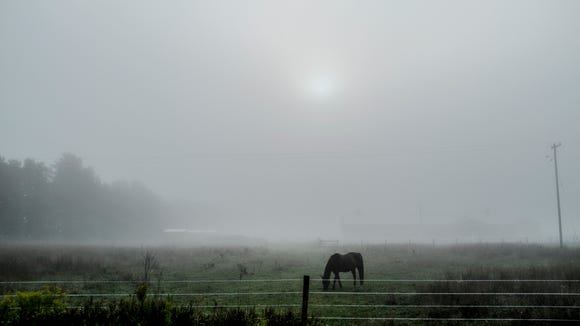 Early morning fog obscures the sun and the background of this horse ranch in St. Johns Monday morning.