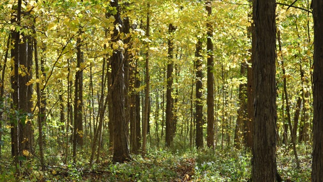 McVey Memorial Forest is located just north of Farmland.