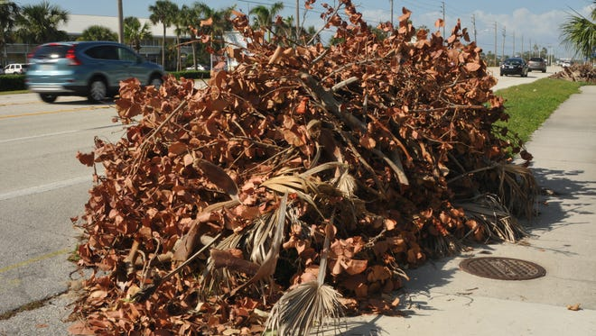 Yet to be picked up as of Oct. 26 are these branches and other vegetative waste collected along State Road A1A in Satellite Beach.