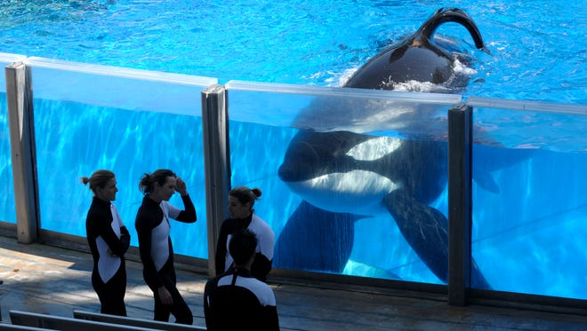 In this March 7, 2011 file photo orca whale Tilikum, right, watches as SeaWorld Orlando trainers take a break during a training session at the theme park's Shamu Stadium in Orlando, Fla. Tilikum, an orca that killed a trainer at SeaWorld Orlando in 2010, has died. According to SeaWorld, the whale died Friday, Dec. 30. 2016.