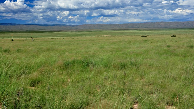 The Southwest Environmental Center is hosting an all-day trip to the Otero Mesa grasslands in southern New Mexico.