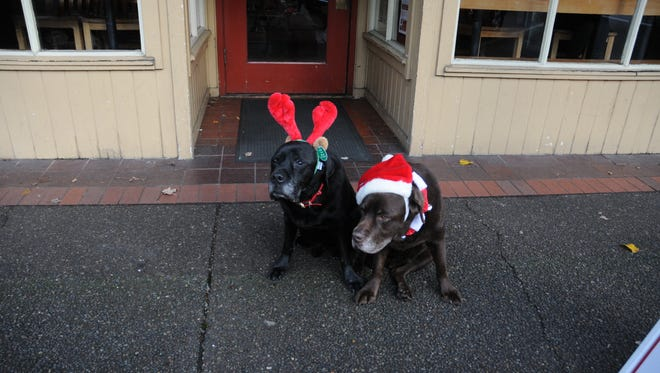 Cooper, left, and Cody, both almost 15, get their yule on at Holding Court. The litter mates were promoting a fundraiser at Pet Etc. this Saturday.