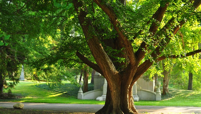 Even a very large tree can be healthy and pose little hazard. Don't fall for a need to rejuvenate.