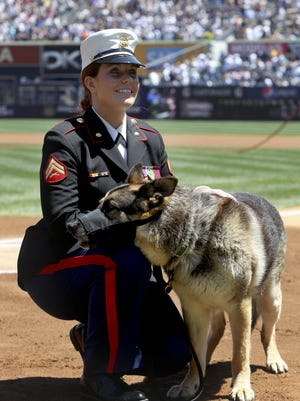 Former Marine Cpl. and Purple Heart recipient Megan Leavey and combat dog Sgt. Rex  in a ceremony before a  game  at Yankee Stadium  May 13, 2012.  The pair worked more than 100 missions searching for roadside bombs, were injured in the line of duty and went through physical therapy together. After five years of waiting for Rex's service to end and filling out paperwork, Leavey finally won approval to bring the 11-year-old German Shepherd home. (AP Photo/Seth Wenig)