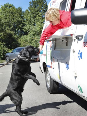 Louie, a 3-year-old Lab owned by Trina Owens of Weymouth, gets some peanut butter and bacon flavored ice cream. Greg Derr/The Patriot Ledger