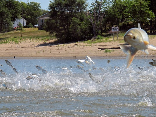 636377207254759555-AP-ASIAN-CARP-GREAT-LAKES-59744957.JPG