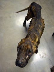 Layla was extremely emaciated when she was brought