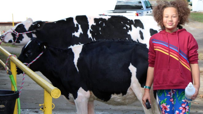 Jiyana Easterday, a member of the Country Kids 4-H Club, cares for her dairy cattle last year at the Hillsdale County Fair. This year, she earned first place in dairy showmanship.