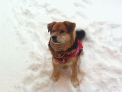 How to get your dog to potty in the snow and cold weather