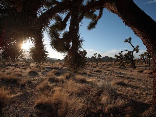 635593673587708926-Joshua-Tree-National-Park