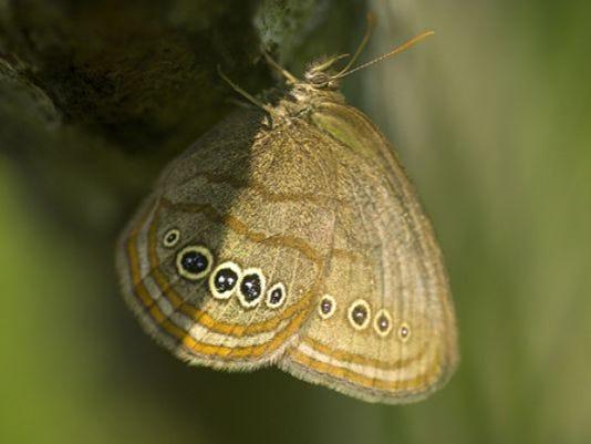 635654683730241276-butterfly