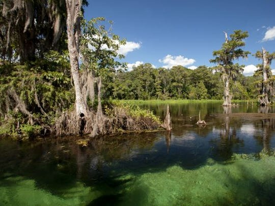 Environmental groups want to see Amendment 1 proceeds restore fully funding to Florida Forever, whose list of projects include proposed land purchases around Wakulla Springs.