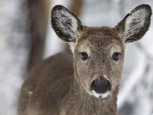635729111861484854-deer