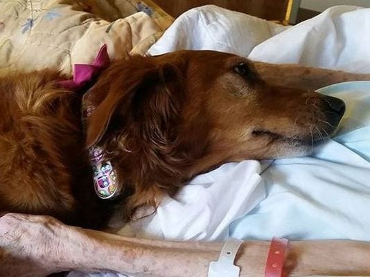 635760925526260281-635759465207103085-JJ-therapy-dog