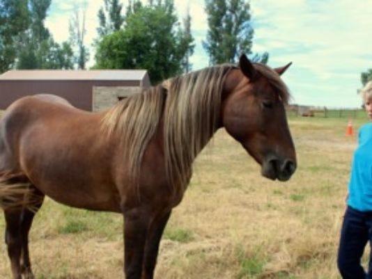635878503517460642-horse.jpg