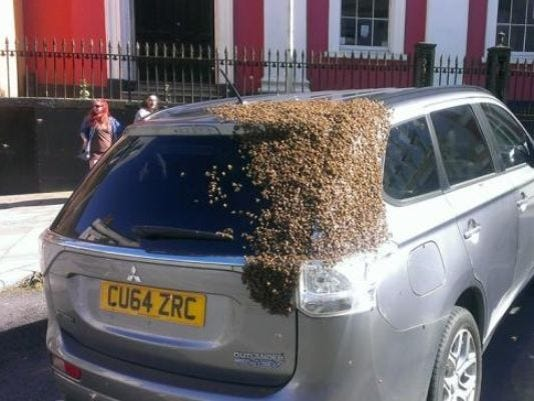 Bees on car