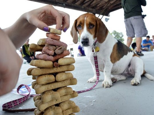 Animal Rescue Inc. will hold its 13th annual Dogs'
