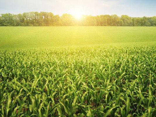 636143707154533129-FON-farm-field.jpg