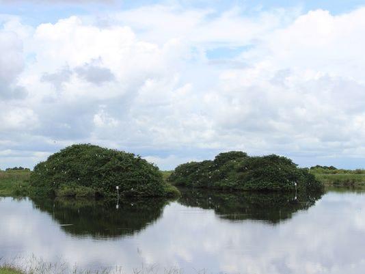 Stick-Marsh.jpg