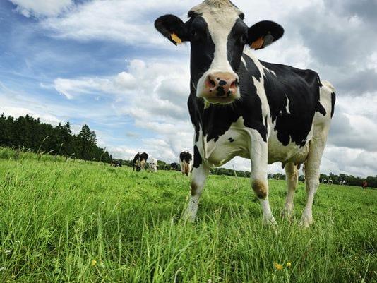 636178374802613362-FON-farm-cow.jpg