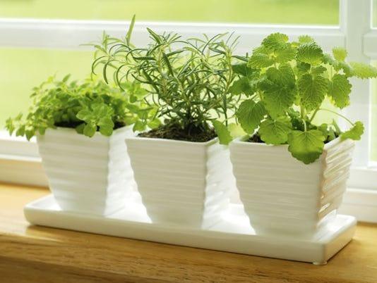 Herbs-ThinkstockPhotos-104831843.jpg