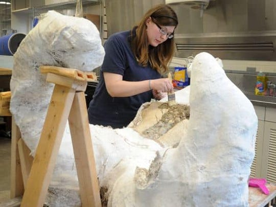 See scientists work on a pygmy mammoth in Santa Barbara.
