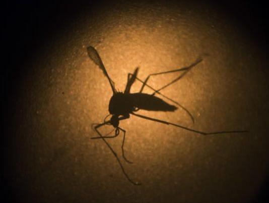 636398032346647808-mosquito.jpg