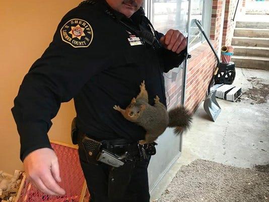 636489740852827022-deputy-and-squirrel-courtesy-larimer-county-sheriff-1513367354103.jpg-11950144-ver1.0-1-.jpg