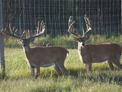 Owners were paid $52,000 for depopulation of their planned Bayfield County deer farm
